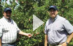Mike Taylor: Apple Grower Of The Year
