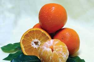 Fresh Appeal of New Citrus Varieties
