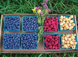 Summer-Long Multiple Berry Crops