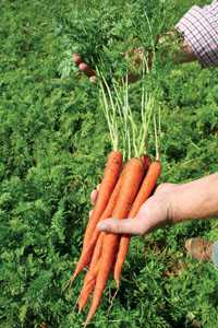 Future Organic Farmer Grant Established