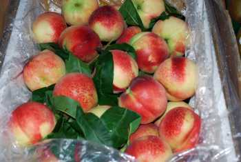 Wawona Packing Expands Recall Of Stone Fruit