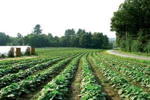 New Manuals Provide On-Farm Organic Plant Breeding Instruction