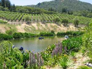 California Winegrowers Lose Court Battle Over Frost Protection