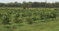Conservation Easement OK'd For 600+ Acres Of Central Florida Farmland