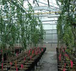 Citrus Nursery Source: Desperately Seeking Seedless