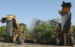 Reap Benefits With Citrus Mechanical Harvesting