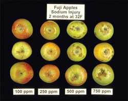 Apple And Pear Storage Disorders