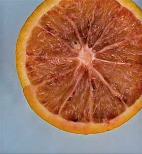 Popularity of Blood Oranges on the Rise in Florida