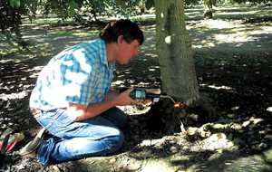 After using a hatchet and chisel to remove gall tissue, remove a 1-inch ring of bark from around the gall. Use a torch to heat, dry, and sterilize the area.
