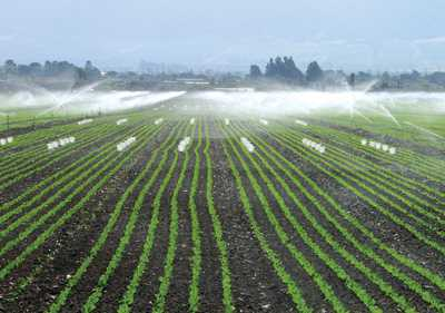 Most Fresh California Produce Has Little/No Detectable Pesticides