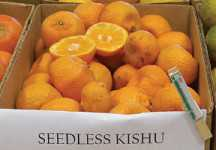 Citrus Nursery Source: The Tiny Wonder