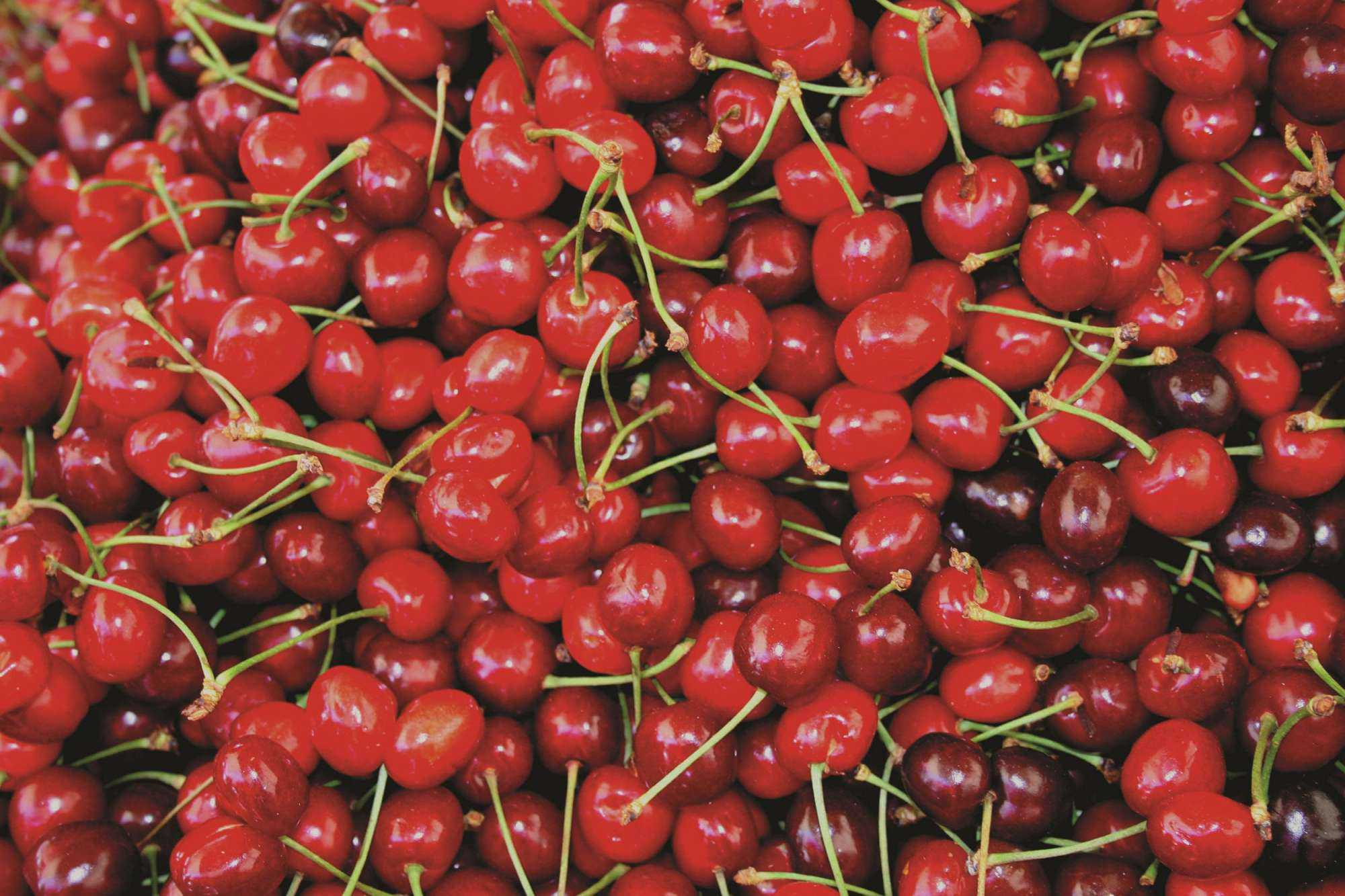 Large Cherry Crop Expected In Washington
