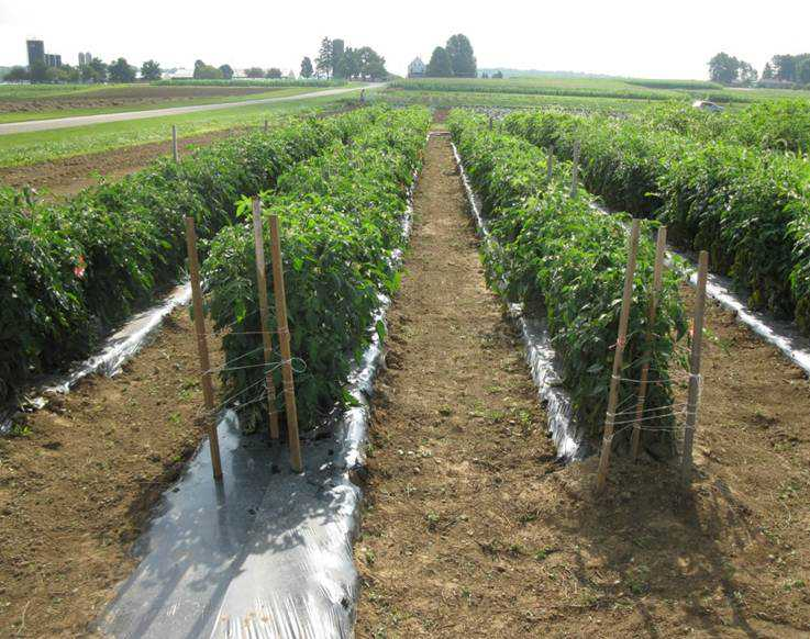 Modern Soil Tests  Give You More Control