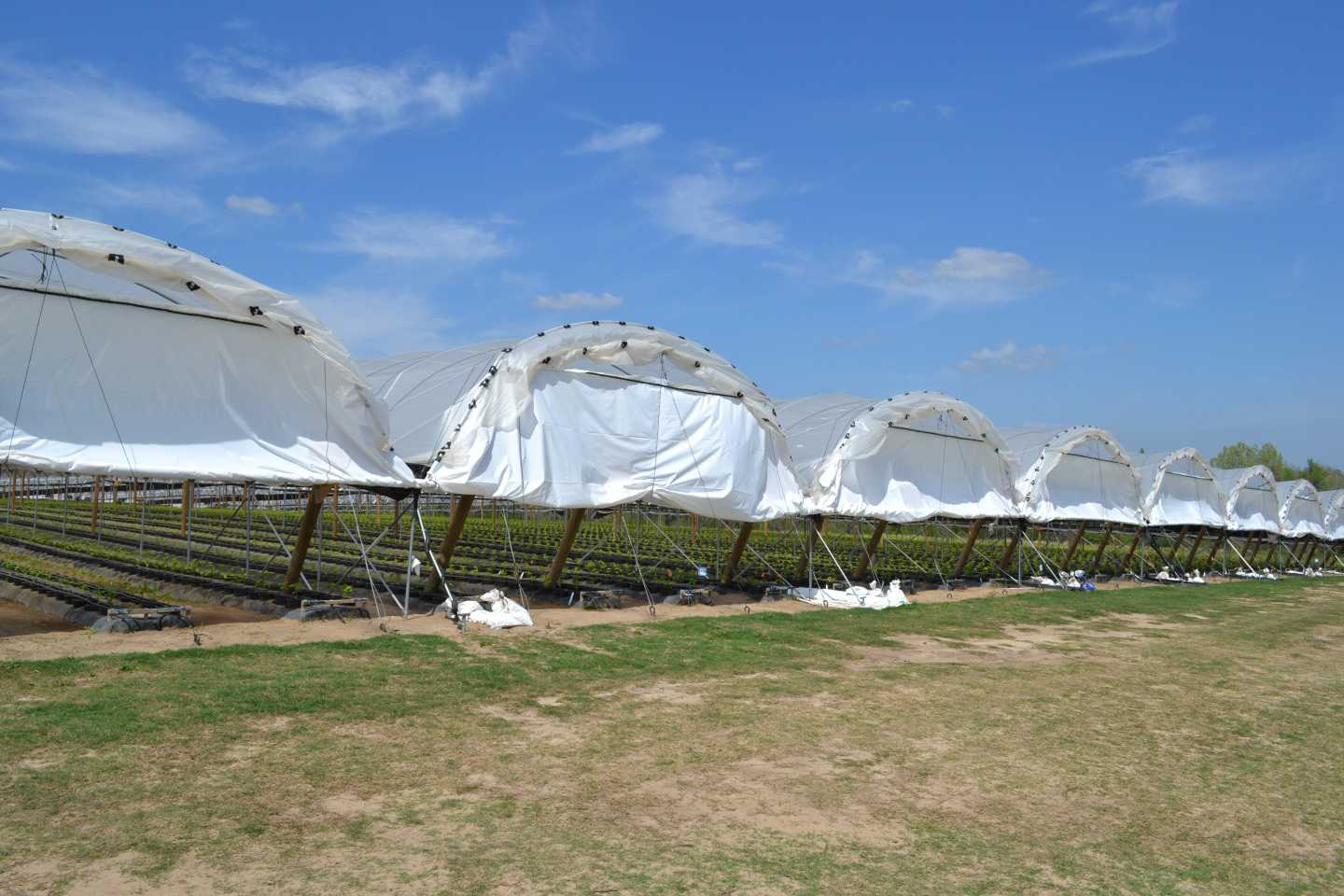 Study: High Tunnels Yield Big Benefits For Florida Blueberry Growers