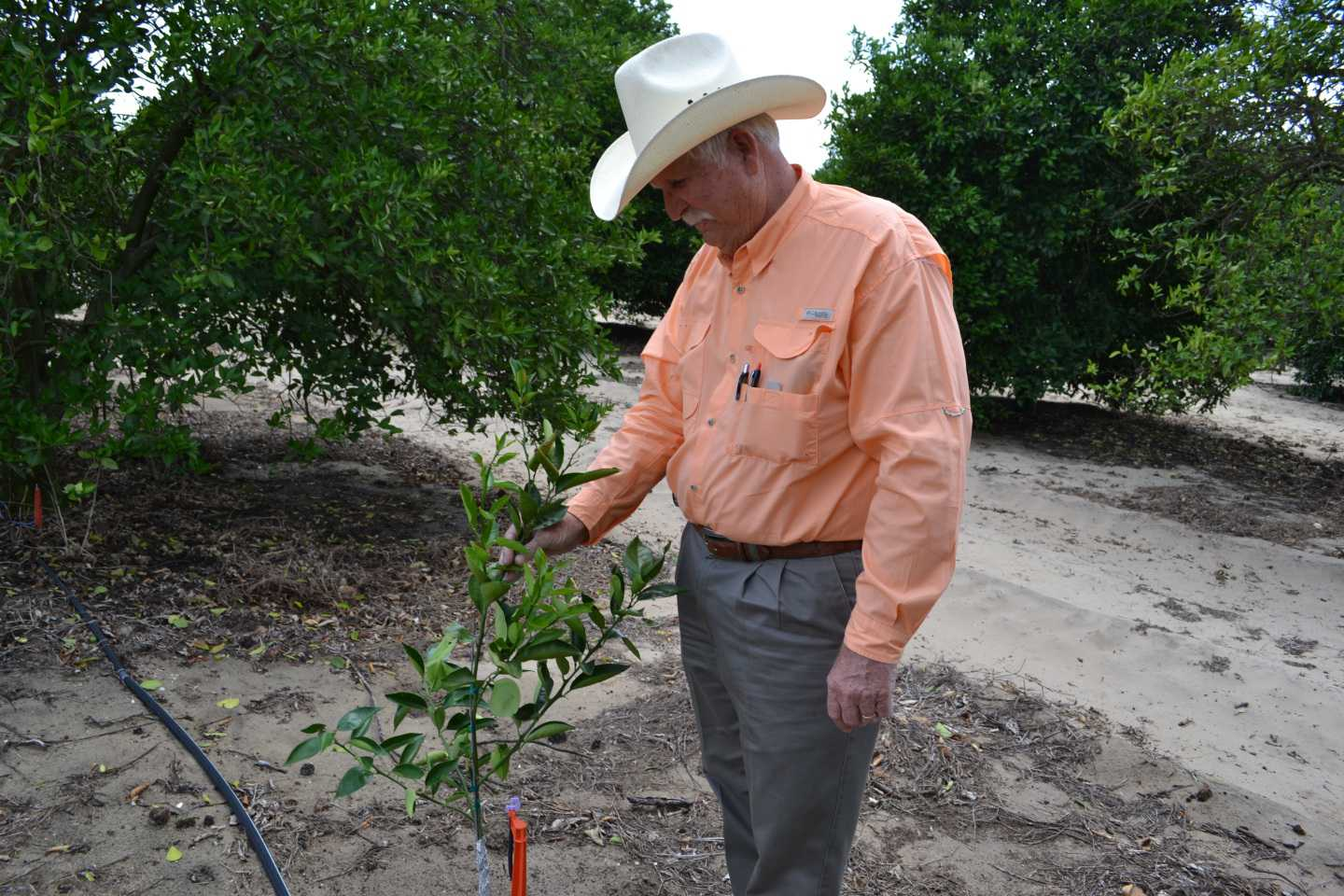 Vic Story: HLB-Resistant Tree Is Key To Industry's Future