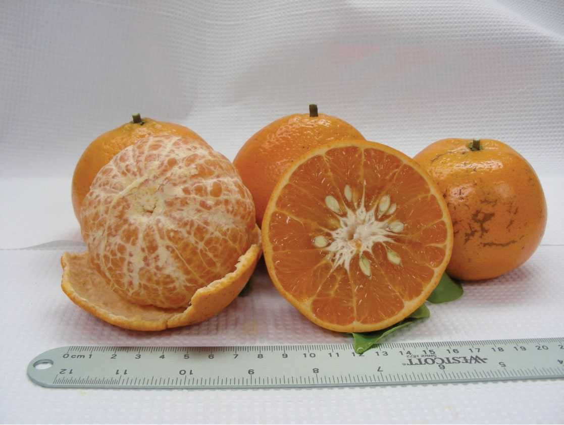 New Citrus Evaluation Program Gets The Green Light
