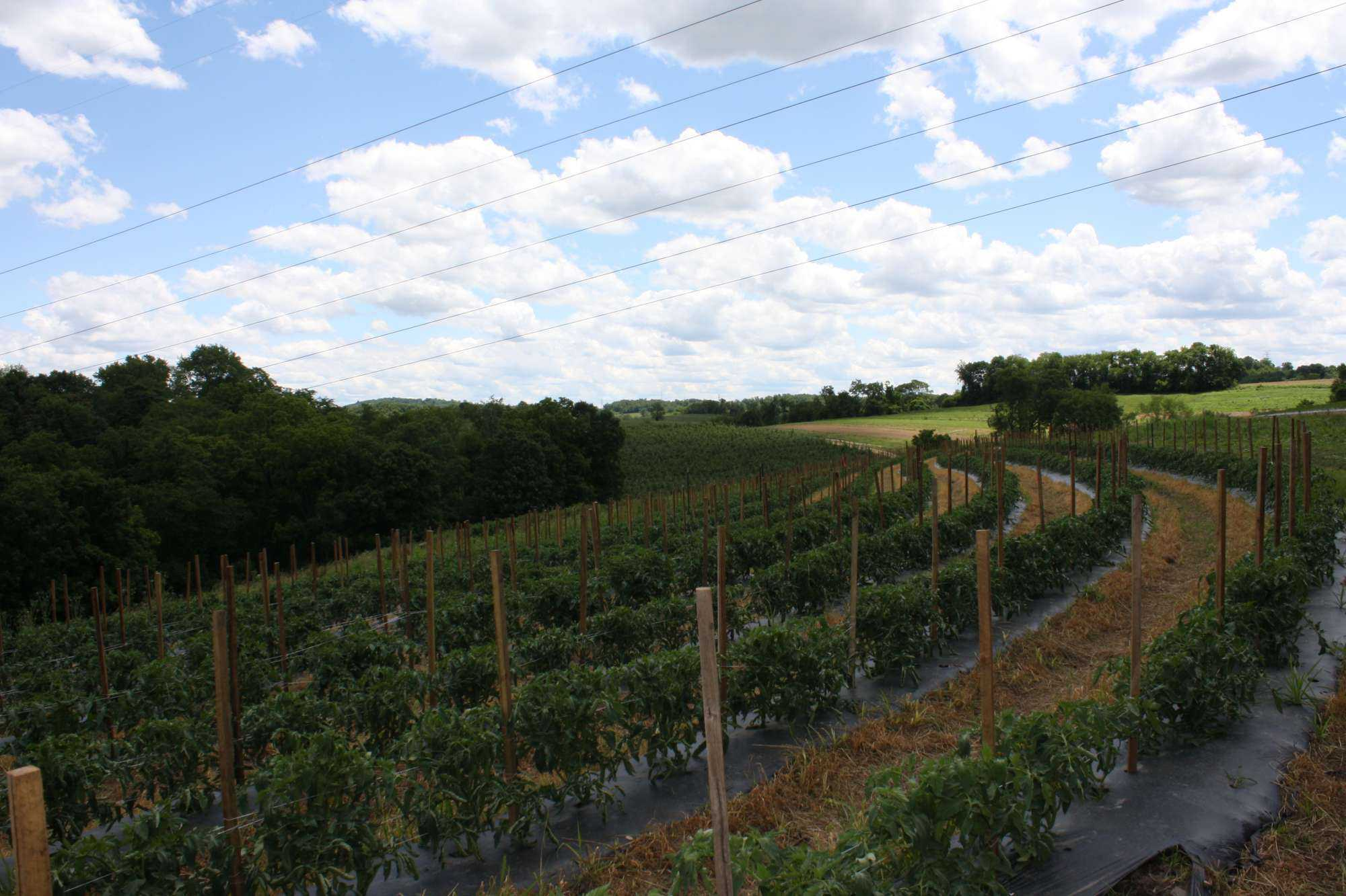 Eco-Friendly Farm Practices May Lead To A  Healthier Agricultural Ecosystem