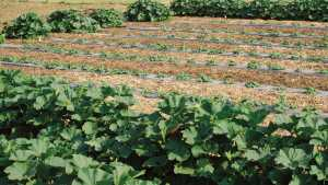 Ecological Farming Association Conference Nears