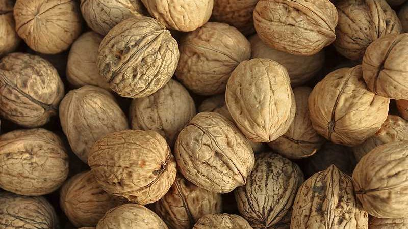 Understanding The Walnut Price Drop