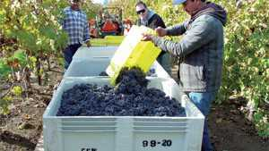2013 California Winegrape Harvest Report