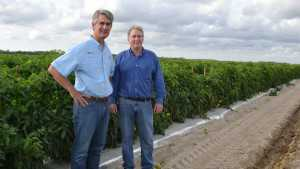 Lipman Gears For Growth In Challenged Tomato Market