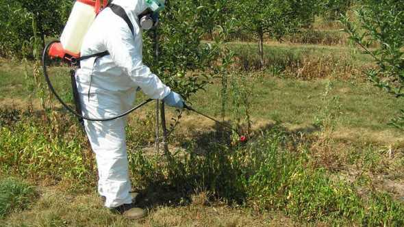 pesticide applicator using a backpack sprayer