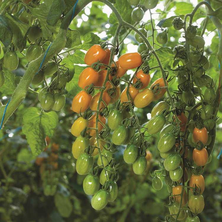 nature fresh farms greenhouse ohio acre growing produce growingproduce