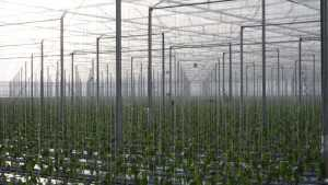 How To Successfully Produce Vegetables In Controlled Environments