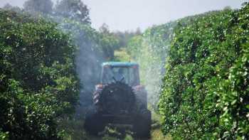 Sprayer in a Florida citrus grove