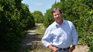 HLB Advice For California Citrus Growers