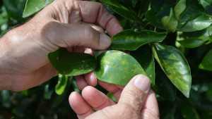 Florida Crop Consultant Receives International Award