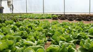 Wisconsin Company Donates Lettuce In Celebration of National Farm To School Month