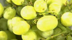 2015 Record Crop Value For California Table Grapes