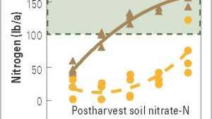 Determine Nitrogen Levels In Sweet Corn With Presidedress Nitrate Test