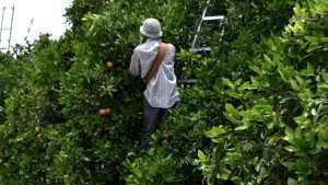 Farm Labor, Mentoring Top Priorities For Citrus Achievement Award Winner