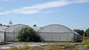 Buzz Building About Citrus Seed-Source Trees Under Cover