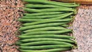 New Broccoli And Bean Varieties Geared To Meet Greater Demands