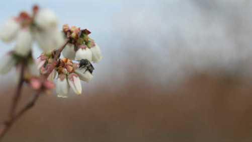 Scientists Building Metrics For Most Efficient Bee Pollinators