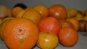 Juicy Subjects In Store For 2015 Florida Citrus Show
