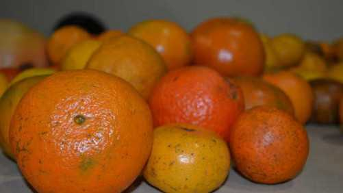 Strength In Numbers Found At 2014 Florida Citrus Show