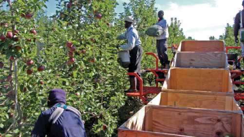 Mechanization Finds Its Place In The Modern Orchard