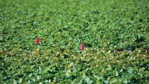 California Farmworker Files Lawsuit Over Gerawan Farming Election