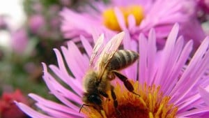 New Pollination Management Video Released