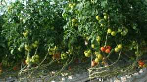 Improve Your Greenhouse Produce Marketing Skills