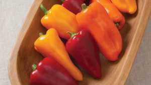 Johnny's Selected Seeds Showcases Four Vegetable Varieties