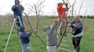 Fruit Growers Speak Out In Favor Of Immigration Reform