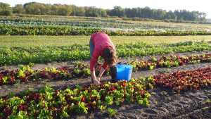 The Country's Largest Organic Farming Conference Will Take Place In February