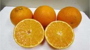 Two New Citrus Cultivars Approved By UF/IFAS