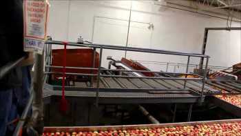 Quick Packinghouse Tour Of BC Tree Fruits Cooperative