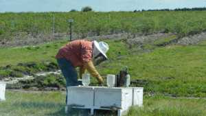 Florida Citrus Growers, Beekeepers Deal Proving To Be Buzzworthy Model